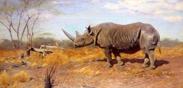 "Photo of ""A RHINOCEROS"" by WILHELM KUHNERT"