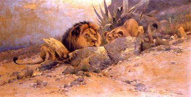 "Photo of ""STALKING LIONS"" by WILHELM KUHNERT"