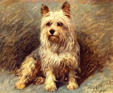 "Photo of ""YORKIE"" by JOHN EMMS"